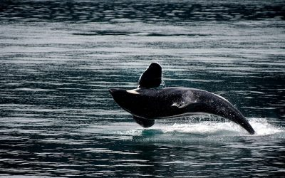 What's Wrong with Whaling?