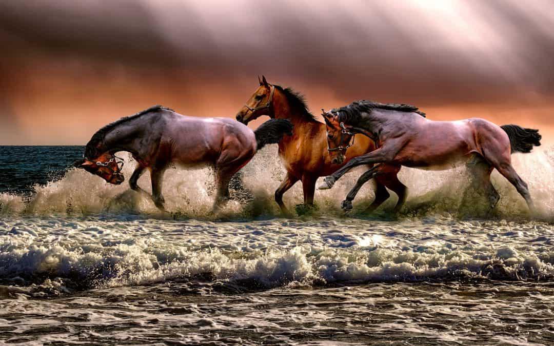 Horses & Chariots & the Israelites
