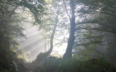 Jesus' Parting Prayer – For Me